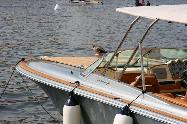 Kachna námořník